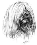 Lhasa Apso Personalised Greetings Card